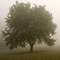 Misty Morning Tree by Andrew Kazmierski