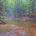 Misty Morning Woodscape Two by Randy Steele