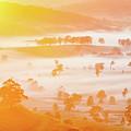 Misty Mornings by Az Jackson
