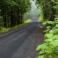 Misty Mountain Road by Idaho Scenic Images Linda Lantzy