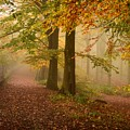 Misty Pathways  by Kerry Palmer