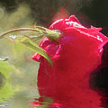 Misty Rose Reflections by Elaine Teague