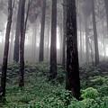 Misty by Subhankar Bhaduri