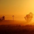 Misty Sunny Morning by Todd Klassy