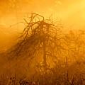 Misty Swamp Sunrise by Irwin Barrett