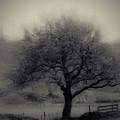 Misty Tree by Karen Lewis