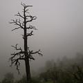 Misty Tree by Rob Lantz