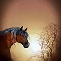 Misty by Valerie Anne Kelly