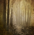 Misty Woodland Path by Meirion Matthias