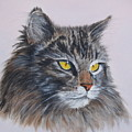 Mitze Maine Coon Cat by Vicky Path