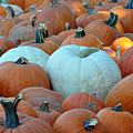 Mixed Pumpkins by Teresa Blanton
