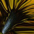 Mixed Sunflower by Ernie Echols