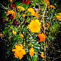 Mixture Of Flowers On Summer Day by Debra Lynch