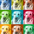 Golden Retriever Warhol by Marilyn Hunt