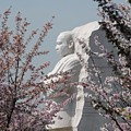 Mlk Blossoms by Jost Houk