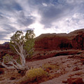Moab Dreams by Kim Blumenstein