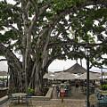 Moana Surfrider Banyan Court - Waikiki Beach by Daniel Hagerman