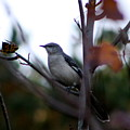 Mocking Bird by Kenna Westerman