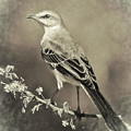 Mockingbird by Carol Fox Henrichs