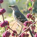 Mockingbird Heaven by Peg Urban