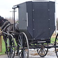Modern Amish Horse And Buggy by Rauno Joks