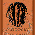 Modocia Typicalis Fossil Trilobite by Melissa A Benson
