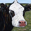Mohawk Cow by Julie Ethridge