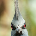 Mohican Bird by Nigel R Bell