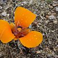 Mojave Orange by Eric Rosenwald