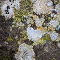 Mold Study by Scott Breazeale
