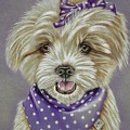 Molly The Maltese by Karrie J Butler