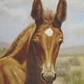 Molly Mule Foal by Dorothy Coatsworth