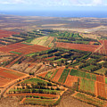 Molokai Cropland by Kevin Smith
