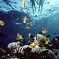 Molokini Snorkeling Couple by Ed Robinson - Printscapes