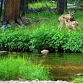 Mom And Baby Deer by Surjanto Suradji