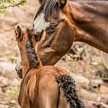 Mom And Baby by Sandy Klewicki