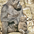 Momma And Baby Gorilla by Jim Fitzpatrick
