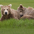 Momma And Cub by Greg Probst