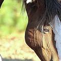 Momma Horse  by Scott D Van Osdol