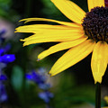 Mom's Garden by Doug Sturgess