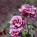 Moms Roses by Susan Kinney