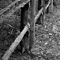 Momvisitfence-carterlane by Curtis J Neeley Jr