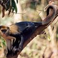 Mona Monkey In A Tree by Team Hazard