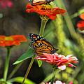 Monarch 8 by Edward Sobuta
