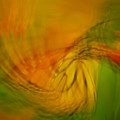 Monarch Abstract by Michael Peychich