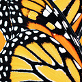 Monarch Butterfly Abstract Pattern by Christina Rollo