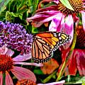 Monarch Butterfly by Allen Beatty