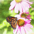 Monarch Butterfly Art by David Stasiak