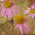 Monarch Butterfly In Pink by David Stasiak