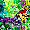 Monarch Butterfly by Nigel Andreola